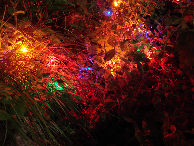 Christmas Lights in the bushes Flickr - Photo Sharing!