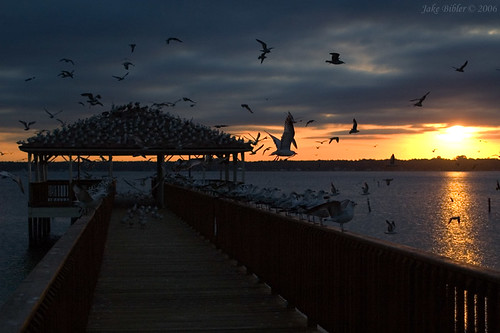 sunset usa bird water landscape dock florida campblanding
