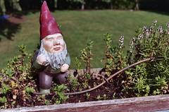 flower, garden gnome, tree, lawn ornament, statue,