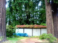 living roof   moss, ferns, etc.   DSC00208