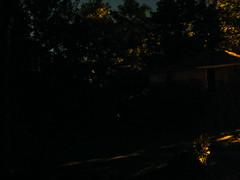 Fireflies 3
