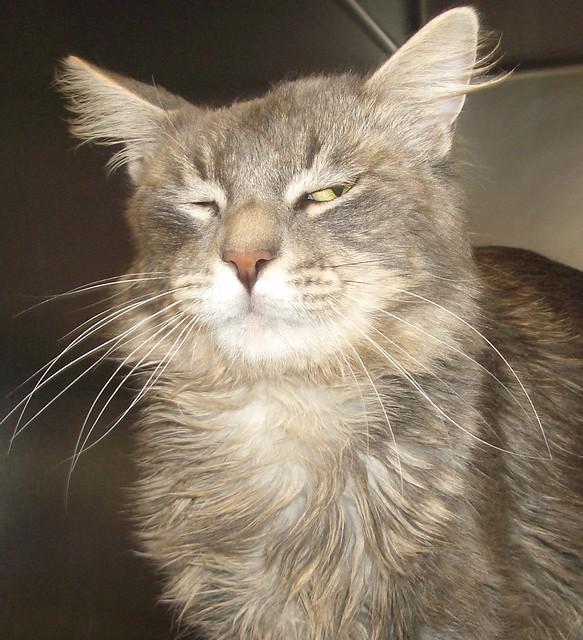 Cat Adoption San Bernardino