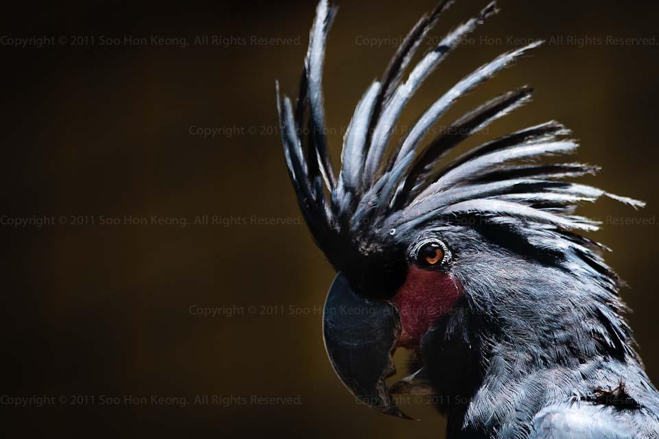 BirdMan - Unmasked