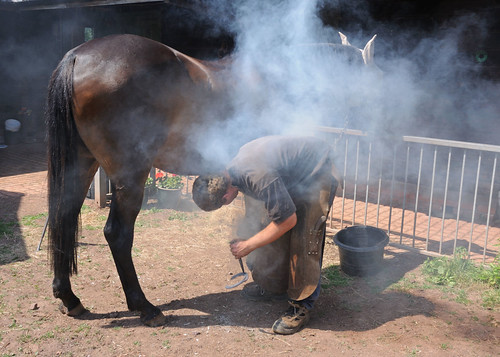 horse somerset shoeing monty farrier bratton