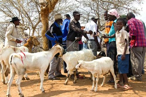Gwanda 12