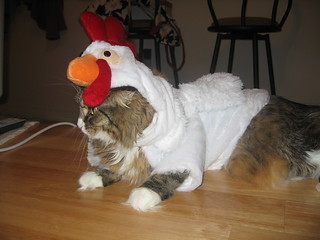 Pearl the Cat in Chicken Outfit, 2 of 4