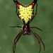 Arrow-shaped Micrathena - Photo (c) Patrick Coin, some rights reserved (CC BY-NC-SA)