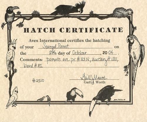 sunnys hatch certificate