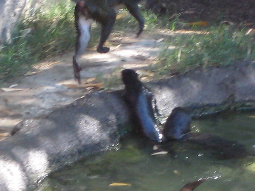 Otters messing with the monkeys