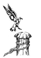 Sea Gull 1