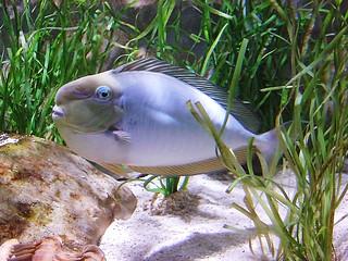 Image of SEA LIFE. blue fish water helsinki underwater sealife exotic linnanmäki dscv1 scoreme32
