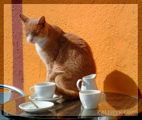 ireland cats detail breakfast bar cat table clare cups tavolo gatto gatti irlanda colazione dettaglio tazze supercontest mondogattocatworld