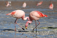 ibis(0.0), animal(1.0), wing(1.0), fauna(1.0), beak(1.0), spoonbill(1.0), flamingo(1.0), bird(1.0), wildlife(1.0),