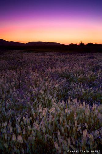 sunset summer sun landscape nikon meadows hills solstice nikkor coyotehills longestday d700 garbongbisaya markjosue