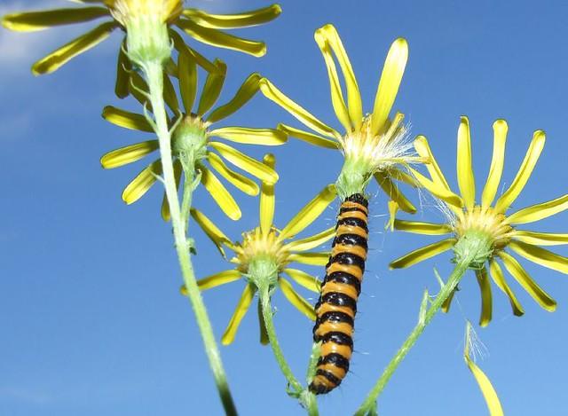 catterpillar on sky