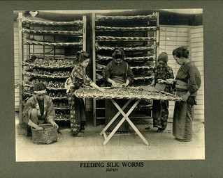 Feeding Silk Worms in Japan about 1900