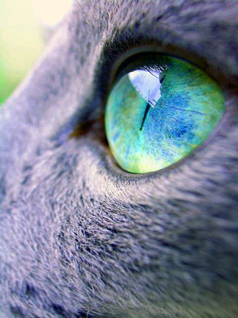 "Russian Blue eye ""good morning,today's sky"""