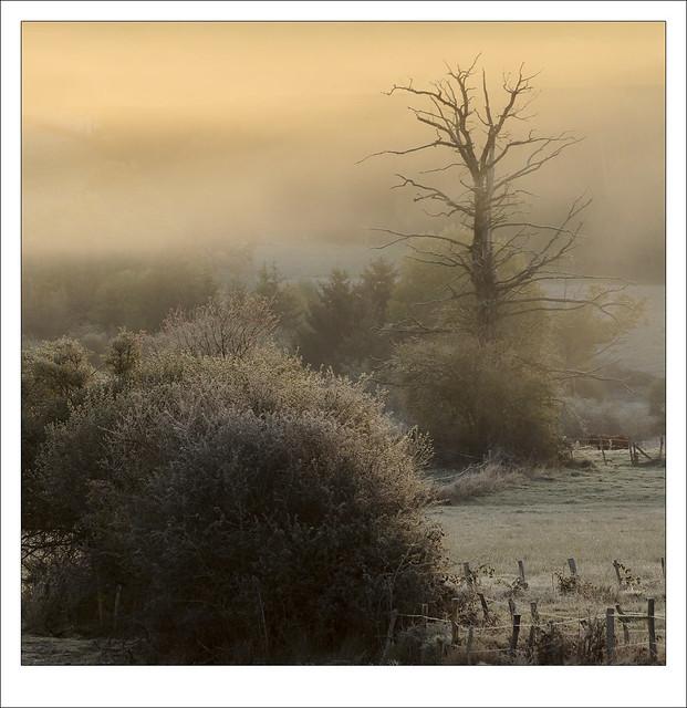 Boom de mist in / tree in morning mist