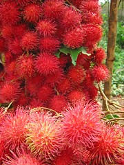 rambutan, flower, fruit,