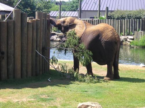 Elephant exhibit at the Montgomery Zoo