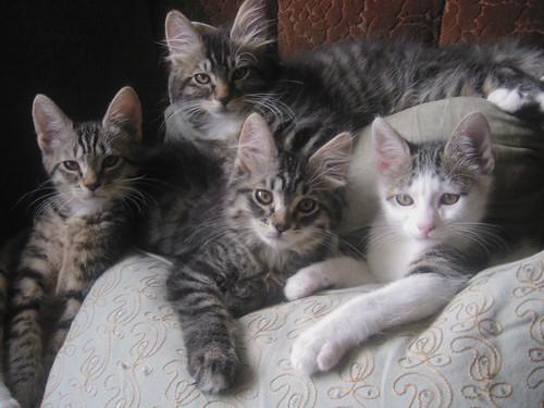 kitten class of 2007