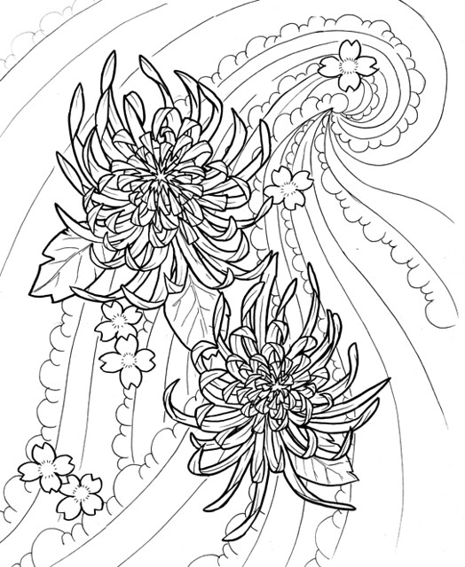 Chrysanthemum Flower Line Drawing : Chrysanthemums flickr photo sharing