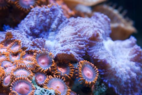 20d canon fishtank corals saltwater atlantisaquariums