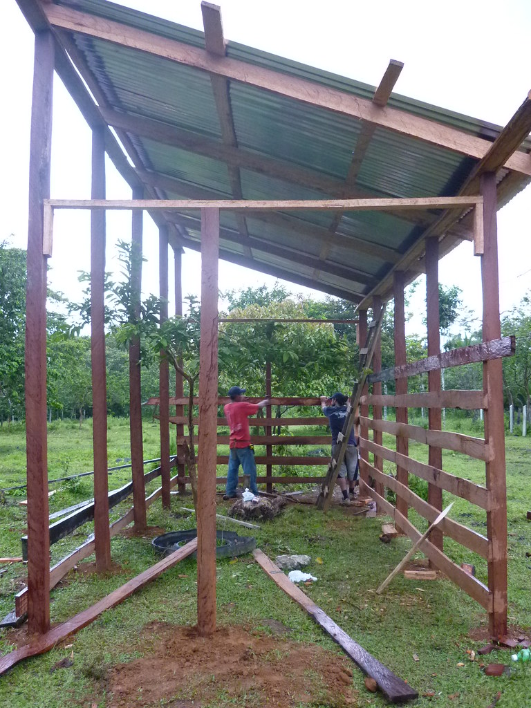 Panthera Field Technician, Ever Urbina, and Field Scientist, Daniel Corrales, fixing one of the side beams to the foundation of the enclosure. These beams are placed high along the side of the enclosure walls to prevent jaguars from jumping over and into the livestock corral.   Read 'Panthera's Guide to Building a Livestock Corral' from our October 2010 newsletter at www.panthera.org/november-2010-newsletter.  Learn more about the work Panthera's Costa Rica team is doing at pantheracostarica.org/.   Also read about our jaguar conservation work in other countries through our Jaguar Corridor Initiative - www.panthera.org/programs/jaguar/jaguar-corridor-initiative - and Pantanal Jaguar Project - www.panthera.org/programs/jaguar/pantanal-jaguar-project.    © Josephine Dusapin