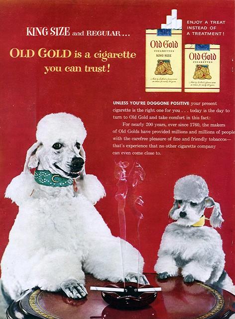 Solid Gold Barking At The Moon Dog Food  Lb