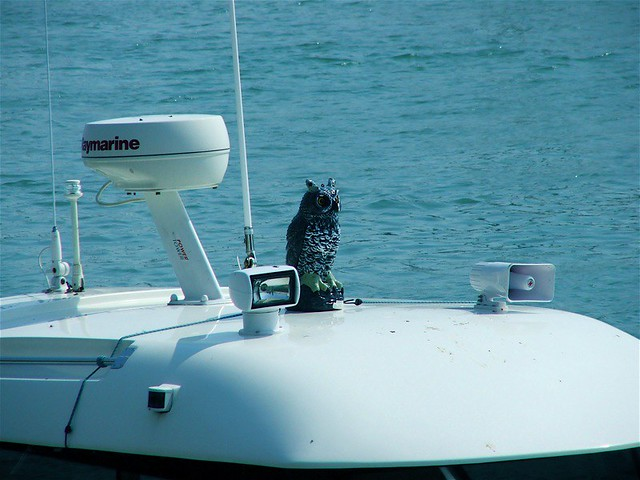 Yacht-bound Bird Scarer (Littlehampton) | Lee Shearman | Flickr