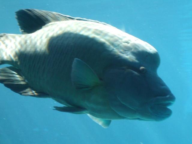 Big fish at sea world flickr photo sharing for Big fish seattle