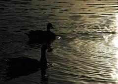 Swim into the Light