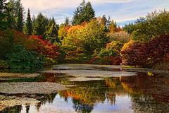 in full fall colour