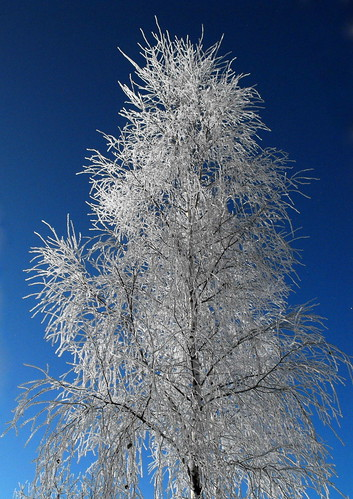 blue trees winter sky snow nature frost lithuania lietuva goldstaraward janinaleo limajulija