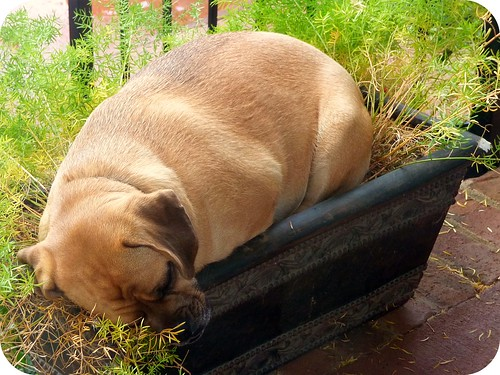 Lucy sleeping in the flower pot