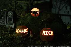 birthday jack o lanterns by rachel