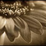 Bild von Flickr.