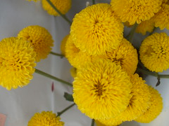 annual plant, flower, yellow, plant, herb, flora, tansy, petal,