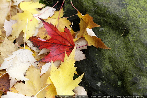 autumn leaves on a mossy rock