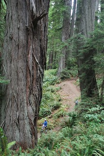 Berry Glen Trail in Redwood National Park