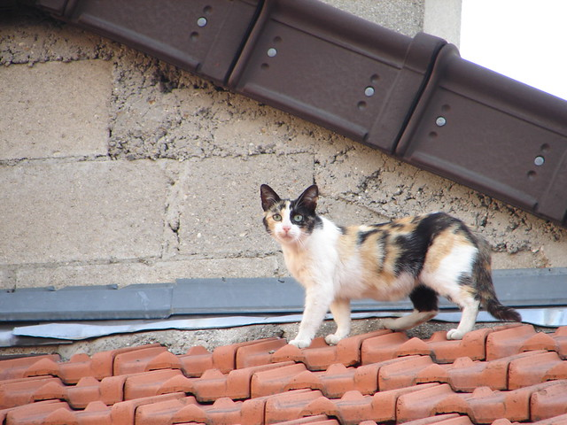 Cats on my roof-07