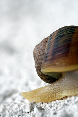 california ca morning nature fauna foot sandiego wildlife sunday elcajon shell snail el september slug slime creatures escargot soe cajon coquille sauvage faune frhwofavs macrophotosnolimits