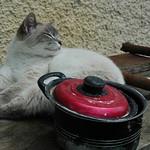 Sleeping Cat - Kakheti, Georgia