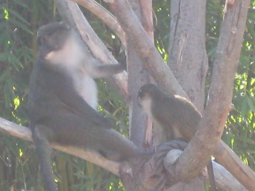 Big monkey, little monkey