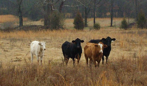 travel trees usa nature landscapes scenery view cows state farm south country peaceful rosebud sanyo arkansas tranquil hwy5 e760 waltphotos