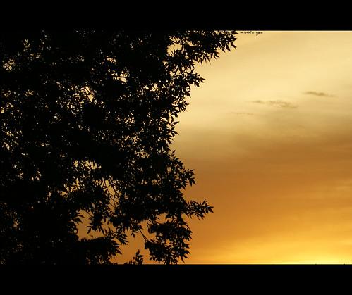sky color tree nature silhouette sunrise golden moment