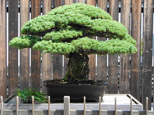 Tutti i segreti del bonsai