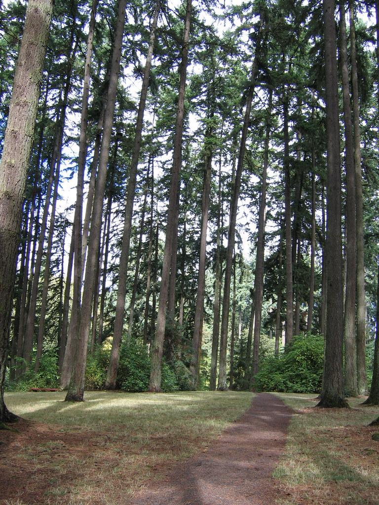 Hendricks Park, Eugene.