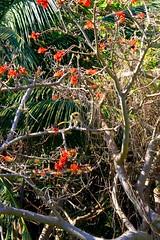 Monkey Among the Flowers