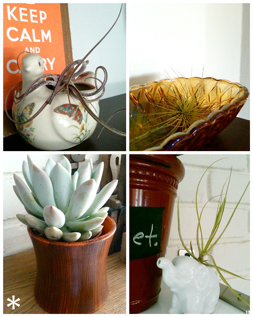 three air plants
